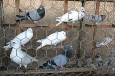 Výstava drob.zvířectva 2007