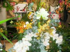 Výlet za krásami orchidejí